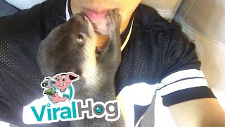 Baby Otter Kisses