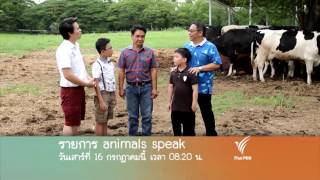 Animals Speak - วัวออร์แกนิก