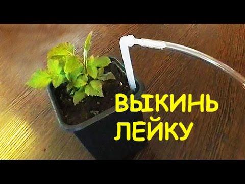 ЦВЕТЫ скажут СПАСИБО! Автоматический ПОЛИВ комнатных растений. Капельный полив по таймеру.