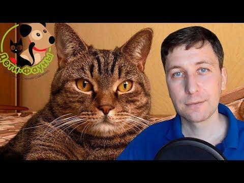 Кошка чешется, основные причины. Как уменьшить зуд у кошки?