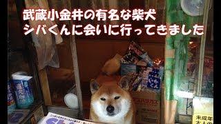 【東京都】へいらっしゃい!とお客を出迎えてくれる柴犬くんがカワイイ♪