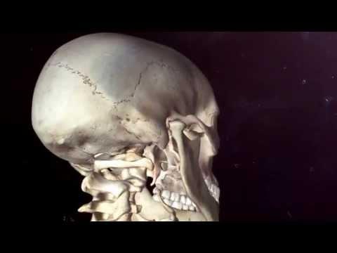 Centro per il trattamento delle articolazioni e della colonna vertebrale Yaroslavl Tolbukhina