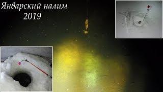 Январский налим 2019 / January burbot 2019