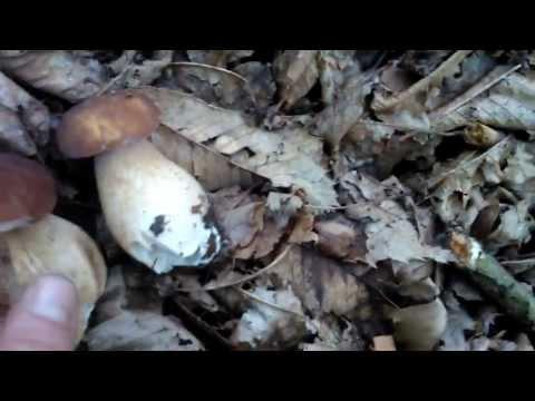 Il pulsante di piedi per comprare un fungo con fissaggio nel caso
