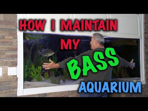 How I Maintain My Bass Aquarium