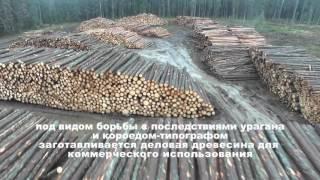 ФИЛЬМ  Уничтожение защитных лесов на ЦВКП