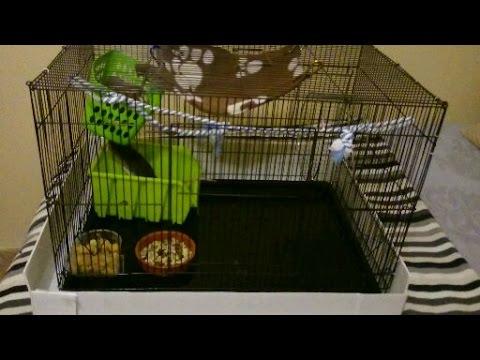 jaulas para ratas y su mantenimiento