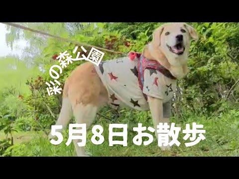 ペットちゃんの動画編集致します 大切なペットちゃんの動画をBGMや映像効果でドラマティックに イメージ1