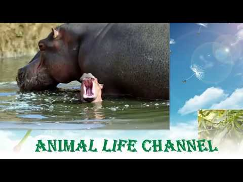 Epic Mating Of Animals Breeding Horses Youtube | Dog ...