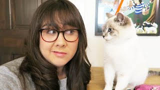 I GOT A CAT (MEET MILQUETOAST) - MONDAY VLOG