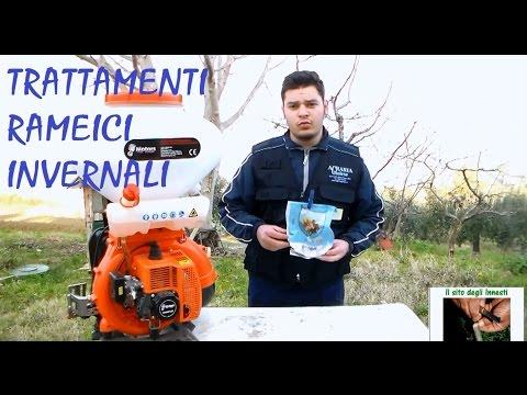 Video scaricare sesso uzbeko