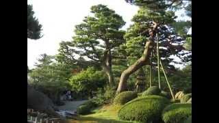 朝の兼六園と金沢城公園緑溢れる夏の兼六園♪石川県日本庭園