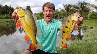 CATCHING COLORFUL FISH on LIVE Bait for My BackYard POND!!