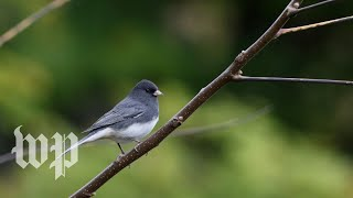 North America has lost nearly 30 percent of its bird population in the last 50 years