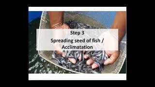 biofloc fish farming training in bangladesh - Kênh video