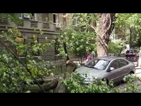 А fallen tree damaged 2 cars in Kiev