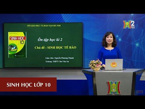 MÔN SINH HỌC - LỚP 10 | ÔN TẬP HỌC KỲ II | 13H30 NGÀY 02.05.2020 | HANOITV