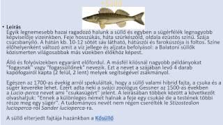 Magyarország halfajai
