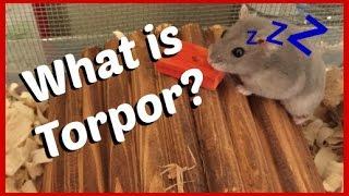 What is Torpor? (Hibernation)