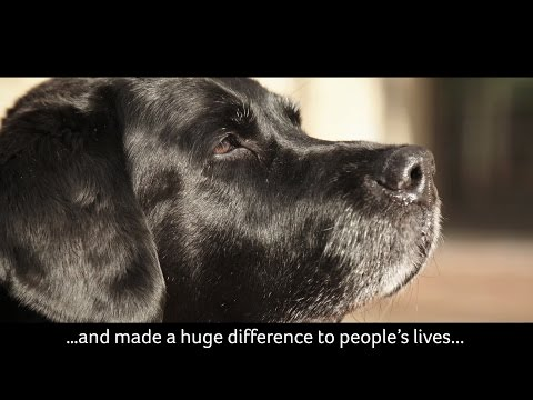 Sabby retired after a distinguished 10-year career with NHS Lanarkshire. Her work helping people with learning disabilities both in the community and the hospital has changed many lives. Her devotion is a perfect example of the special bond between humans and dogs. In February 2017 she was awarded the PDSA Order of Merit in recognition of her service.