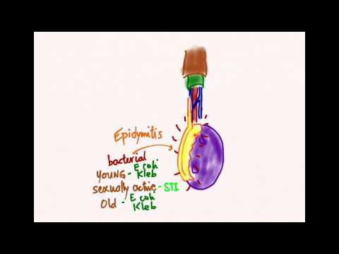 Blume Behandlung von Prostatitis