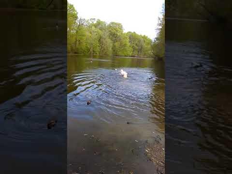 TuffEnuff Training In The Lake