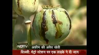 India's biggest illegal opium farming busted : Hindustan main Afghanistan Part 1
