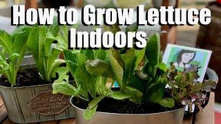 How to Grow Lettuce Indoors - Bring Your Garden INSIDE!