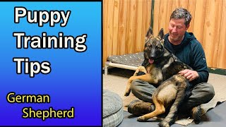 German Shepherd Puppy Training Tips