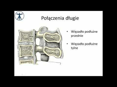 Kości w stawie palucha