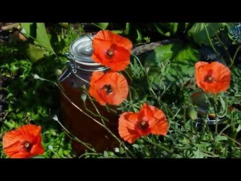 Kapselbänder des Kniegelenks