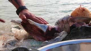 Cook Islands Fish