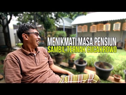 Video KISAH SUKSES : Pak Tutut Ternak Cucakrowo Di Masa Pensiun