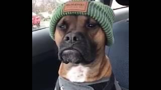 """Cool dog / Kühler Hund """"Massive Green"""""""