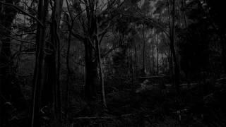 Forestial Transcendence