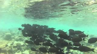 preview picture of video 'Maldives Kuramathi GoPro'
