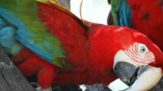 ♫ Ως πότε παπαγάλοι θα ζείτε στα κλουβιά -βάλτε φωνή μεγάλη να βρείτε λευτεριά ΛΕΥΤΕΡΙΑ ♫