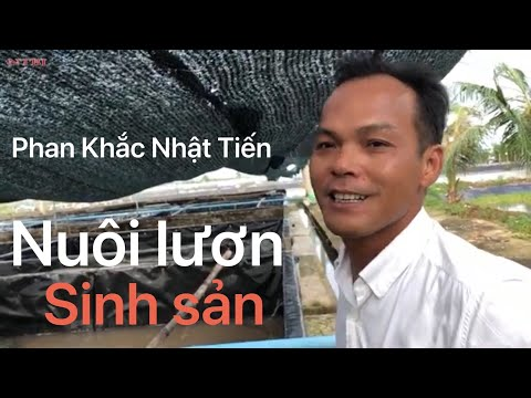 Trang trại nuôi lươn lớn nhất Bạc Liêu
