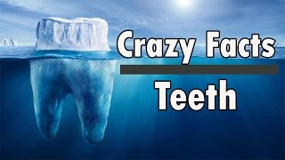 10 Crazy Facts About Teeth You Must Know