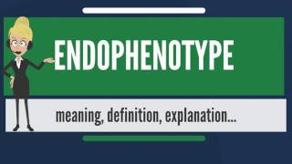 What is ENDOPHENOTYPE? What does ENDOPHENOTYPE mean? ENDOPHENOTYPE meaning & explanation