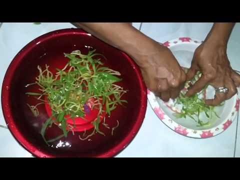 Video Mengeluarkan bibit tanaman angrek dari dalam botol