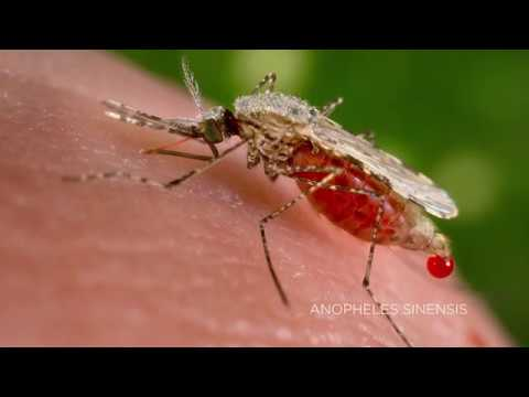 Predicting Malaria Outbreaks With NASA Satellites