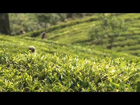 Video of Sri Lanka Travel - Red Dot