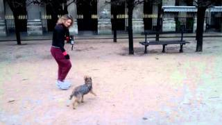 preview picture of video 'Gary Otter the border terrier in the Palais-Royal'