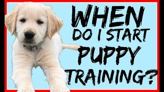 When to Start Training Your Puppy with Americas Canine Educator