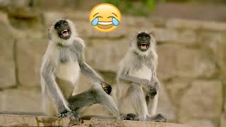 Funniest Animals 😂 - Best Of The monkey compilation Funny Animal Videos 😁 - Cutest Animals Ever 💕😍