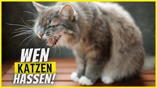 8 Charakterzüge an Menschen, die Katzen so richtig hassen!