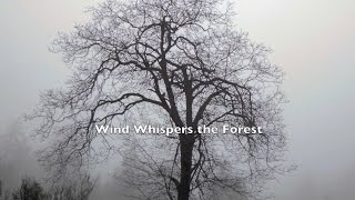 Wind Whispers the Forest