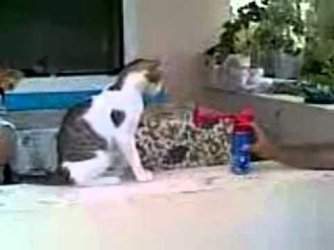 Jak widowiskowo przestraszyć kota