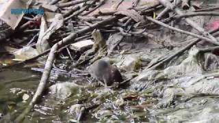 Полчища крыс захватили Рязань